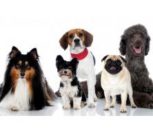 Ліричний кінолог про собак?!